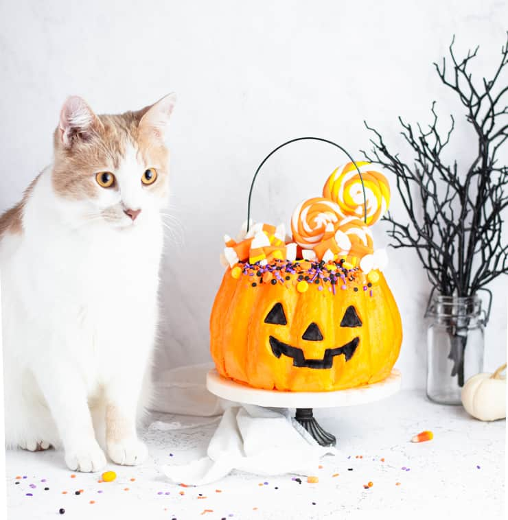 cat sitting next to jack-o-lantern cake